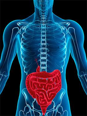 Saude gastrointestinal
